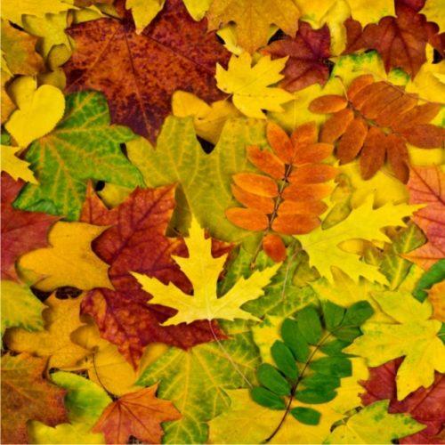jesień (12)